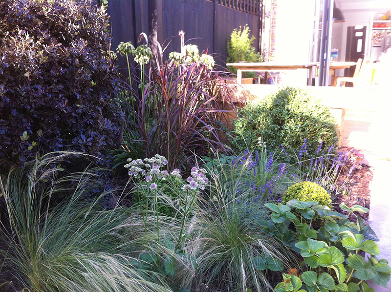 Borders in a contemporary family garden in Balham